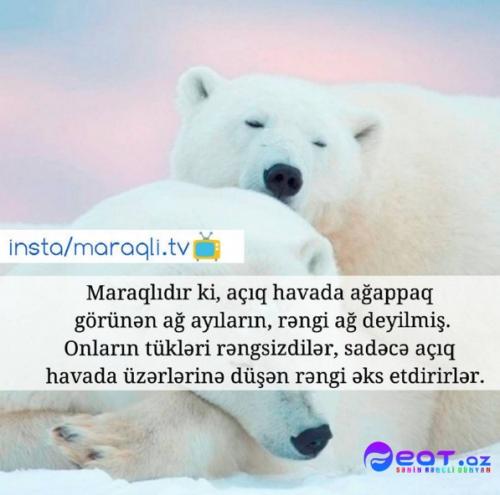Maraqli Faktlar Dan Yazili Səkillər 3 Feat Az Sekiller Xeberler Melumatlar