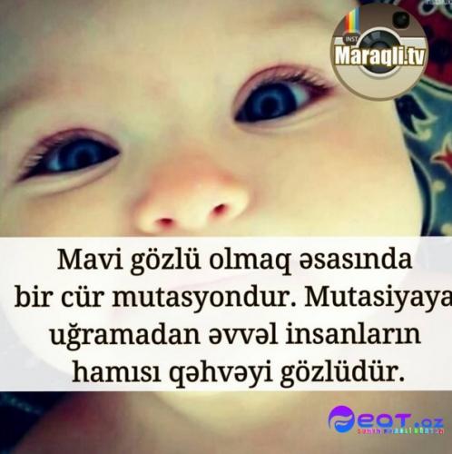 Maraqli Faktlar Dan Yazili Səkillər 11 Feat Az Sekiller Xeberler Melumatlar